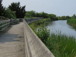 Sutton's Landing boardwalk